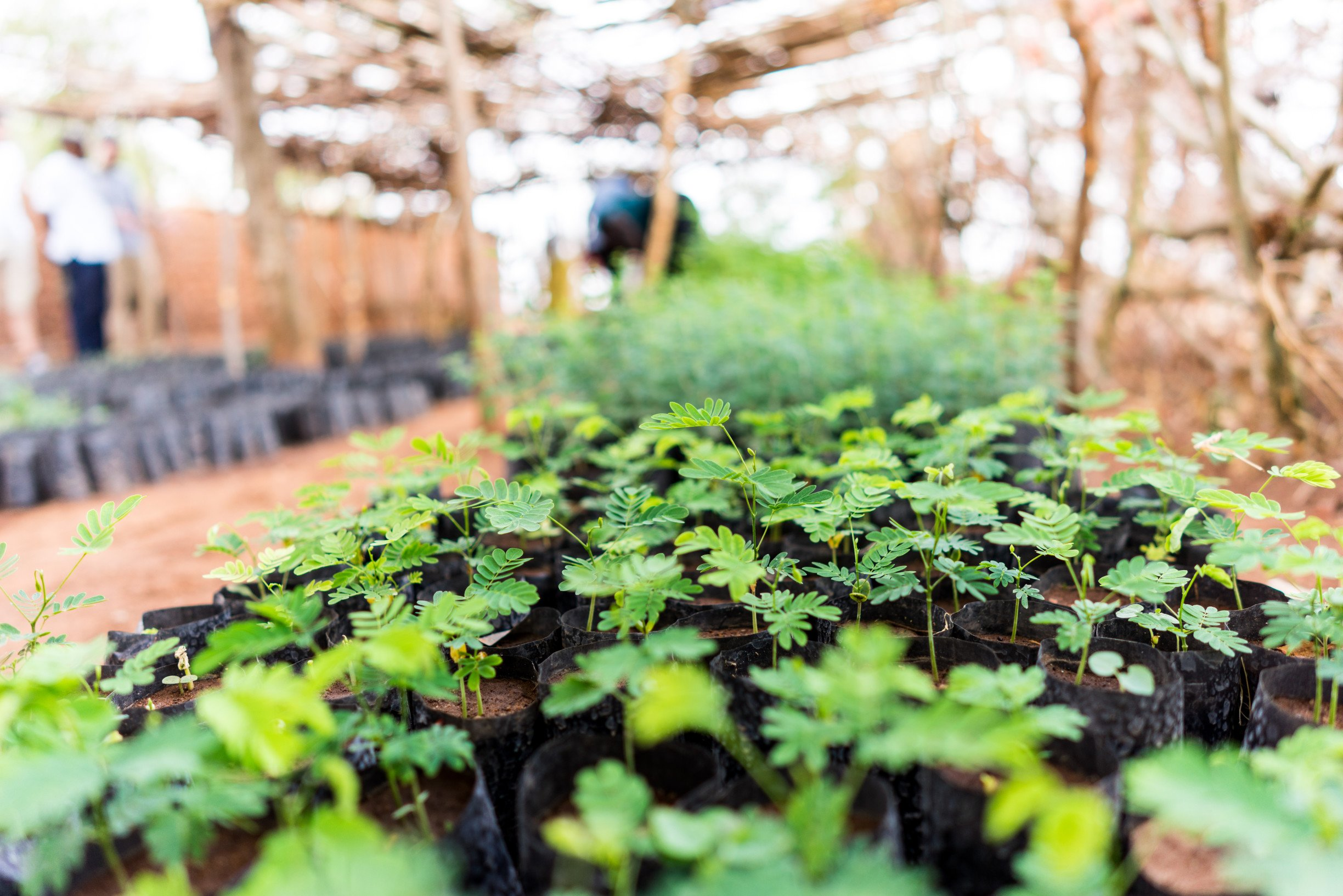 two-million-trees-planted-displate-tanzania-trees-for-the-future2