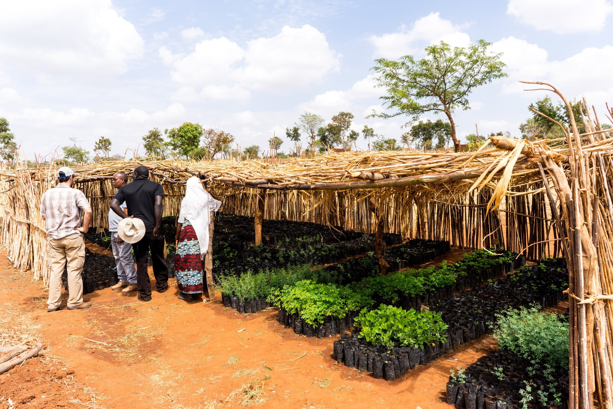 two-million-trees-planted-displate-tanzania-trees-for-the-future