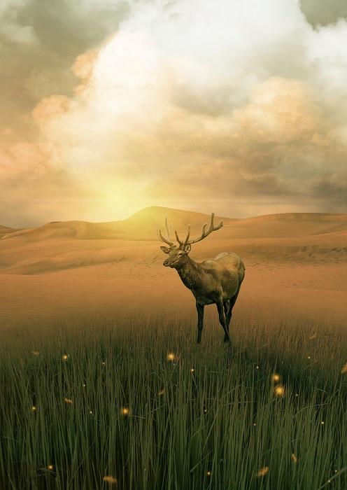 deer on the field