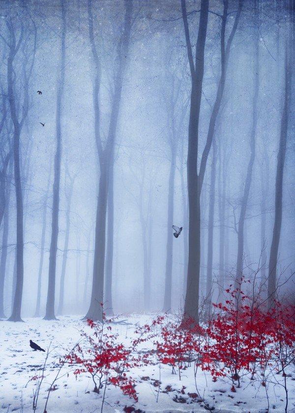 winter-time-season-snow-art-design-illustration-forest