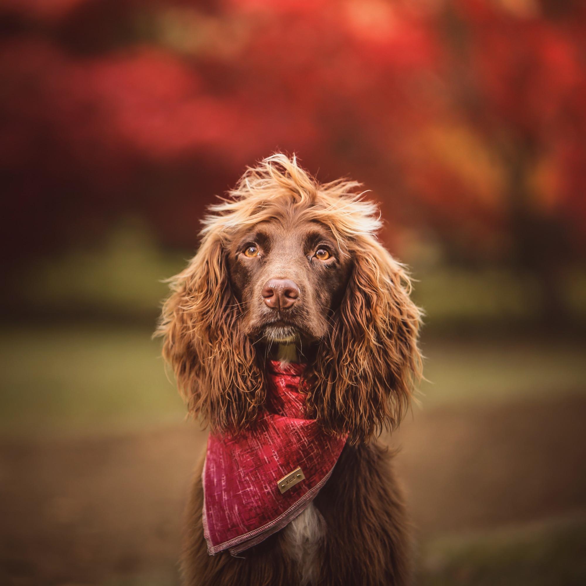 Maximus autumn