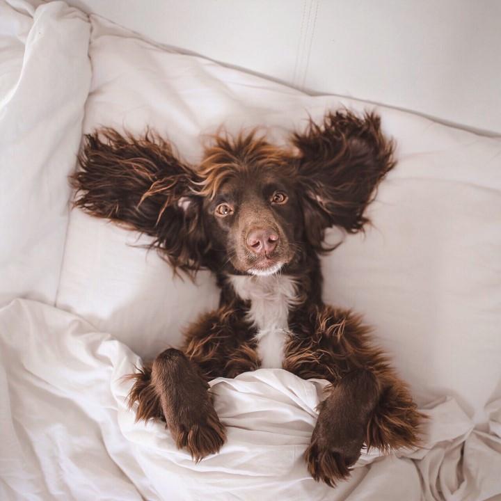 Maximus in bed