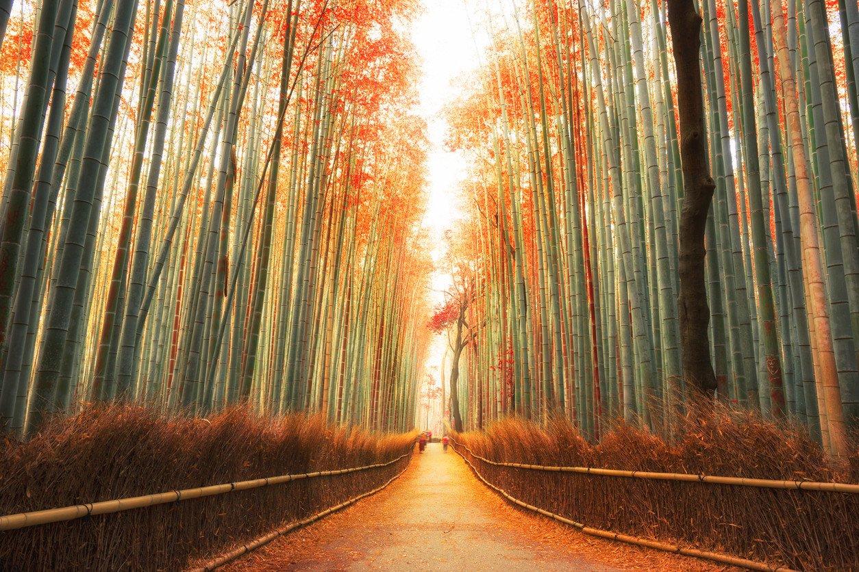 arashiyama-forest-in-kyoto-japan-autumn-photo