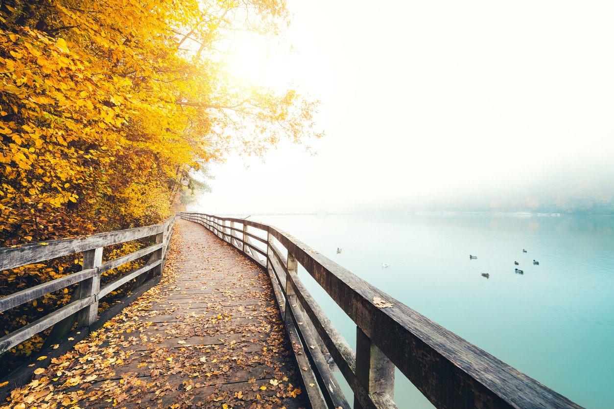 autumn-lake-view-yellow