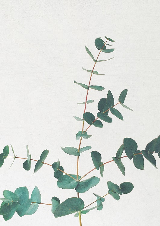 minimal plant poster