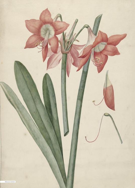 minimal botanical poster