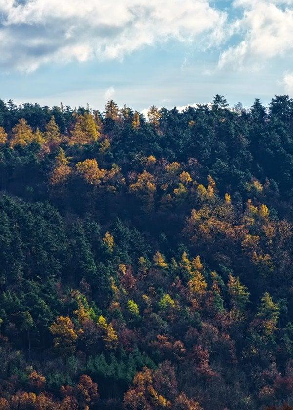 landscape-autumn-fall-leaves-colours-colors-trees-forest-landscape-season-sky-clouds