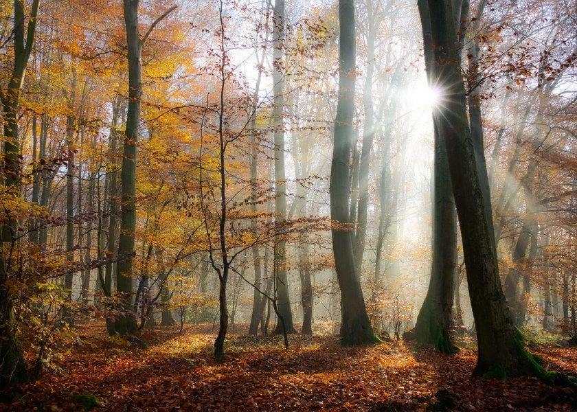 landscape-sunbeams-rays-fog-forest-sunlight-brown-orange-mystery-beech-autumn