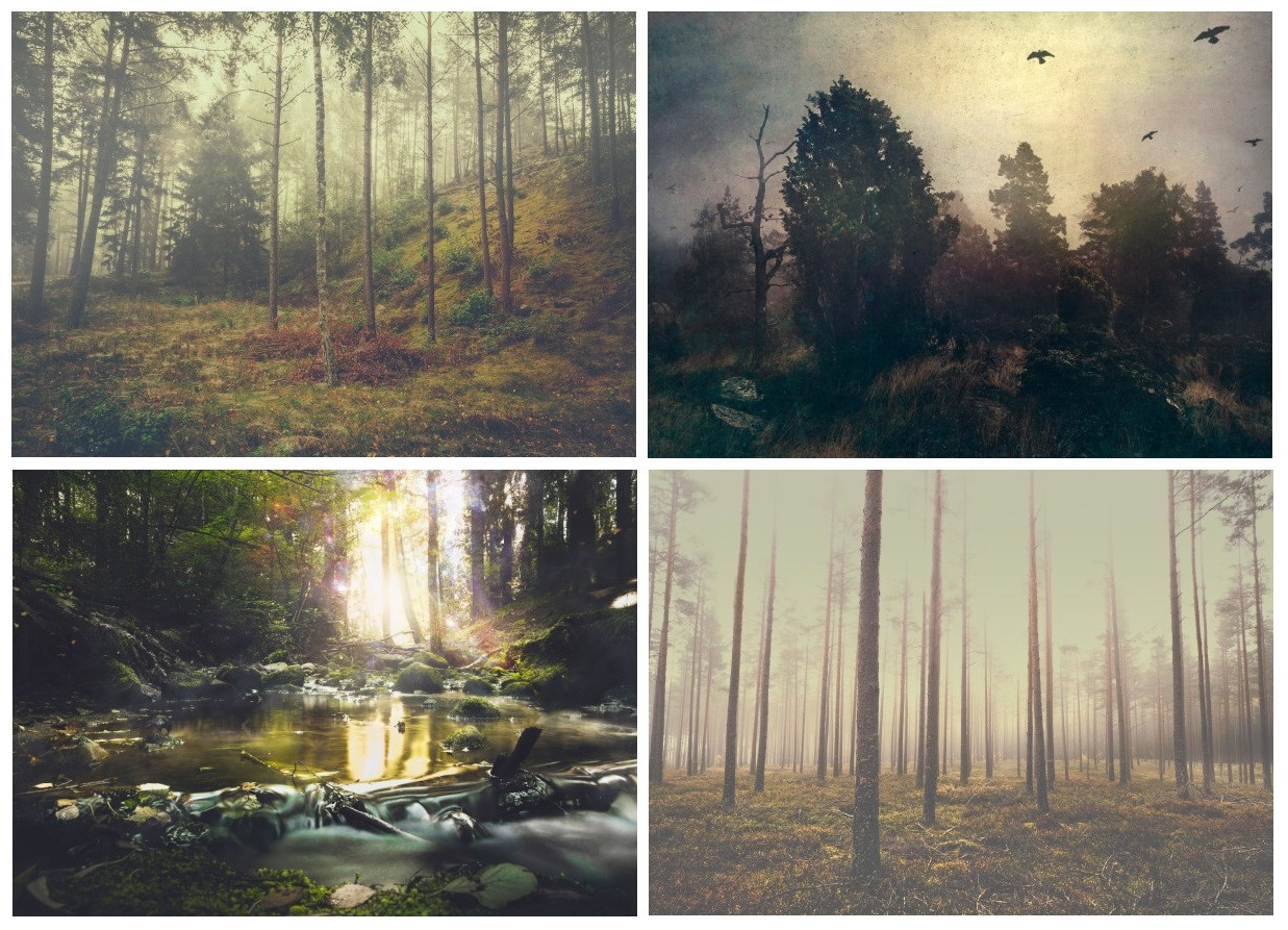 nature-photograph-of-a-forest-and-trees-by-ulf-harstedt