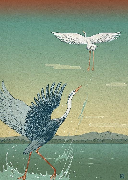 nicolas castell illustration birds