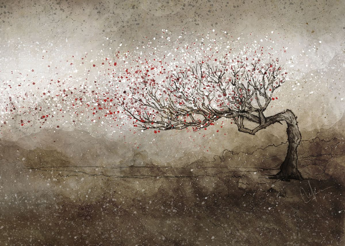 Flowering cherry tree shedding red and white blossoms